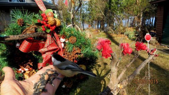 Chickadee Christmas Treats !!-IMG_8597---