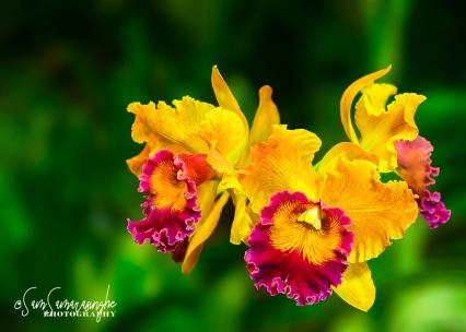 Venice-Orchid-Show-16-Edit